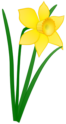 Daffodil vector mothering sunday. Free clipart of jonathan