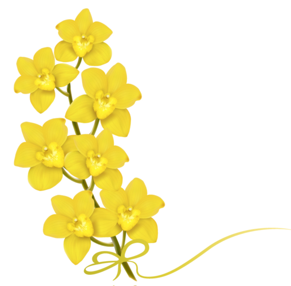 Daffodil vector mothering sunday. Fleurs flores flowers bloemen