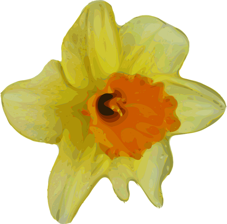 Daffodil vector mothering sunday. Clipart free download on