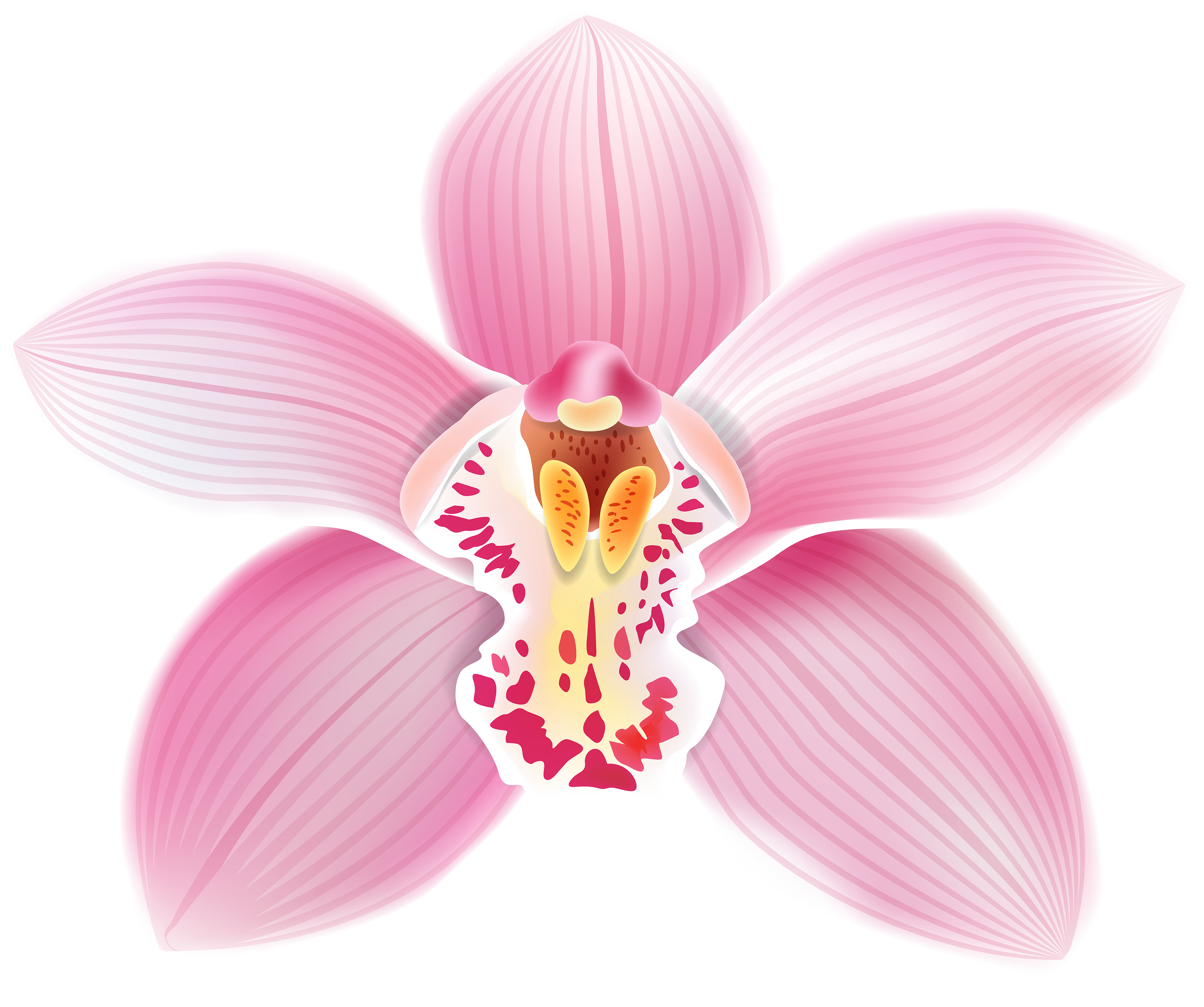Daffodil vector orchid. Pink png clipart best