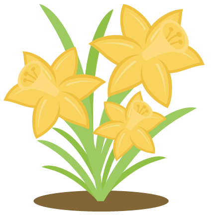Daffodil vector spring. Library download huge