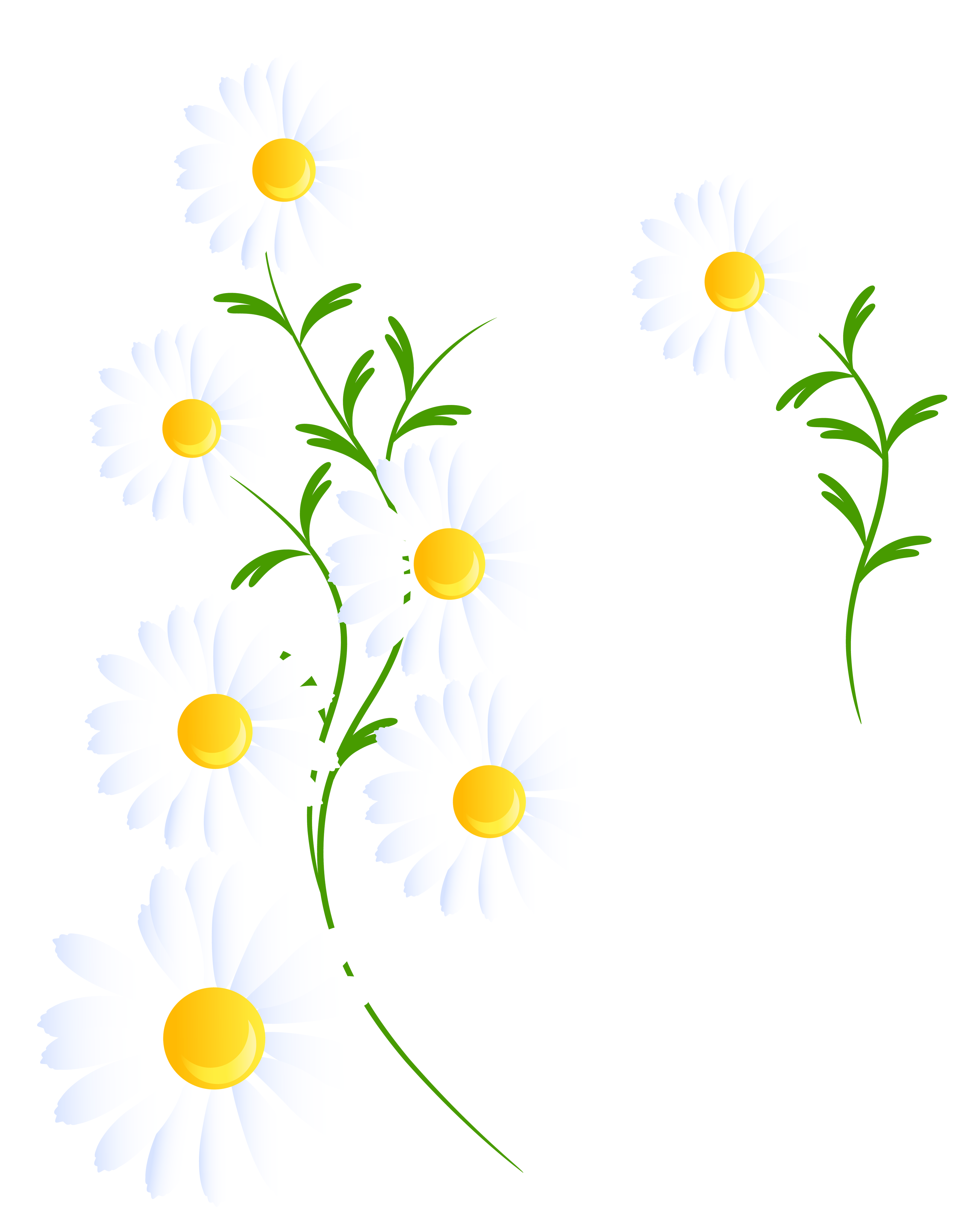 Transparent white daisies decoration. Daisy clipart frame free library