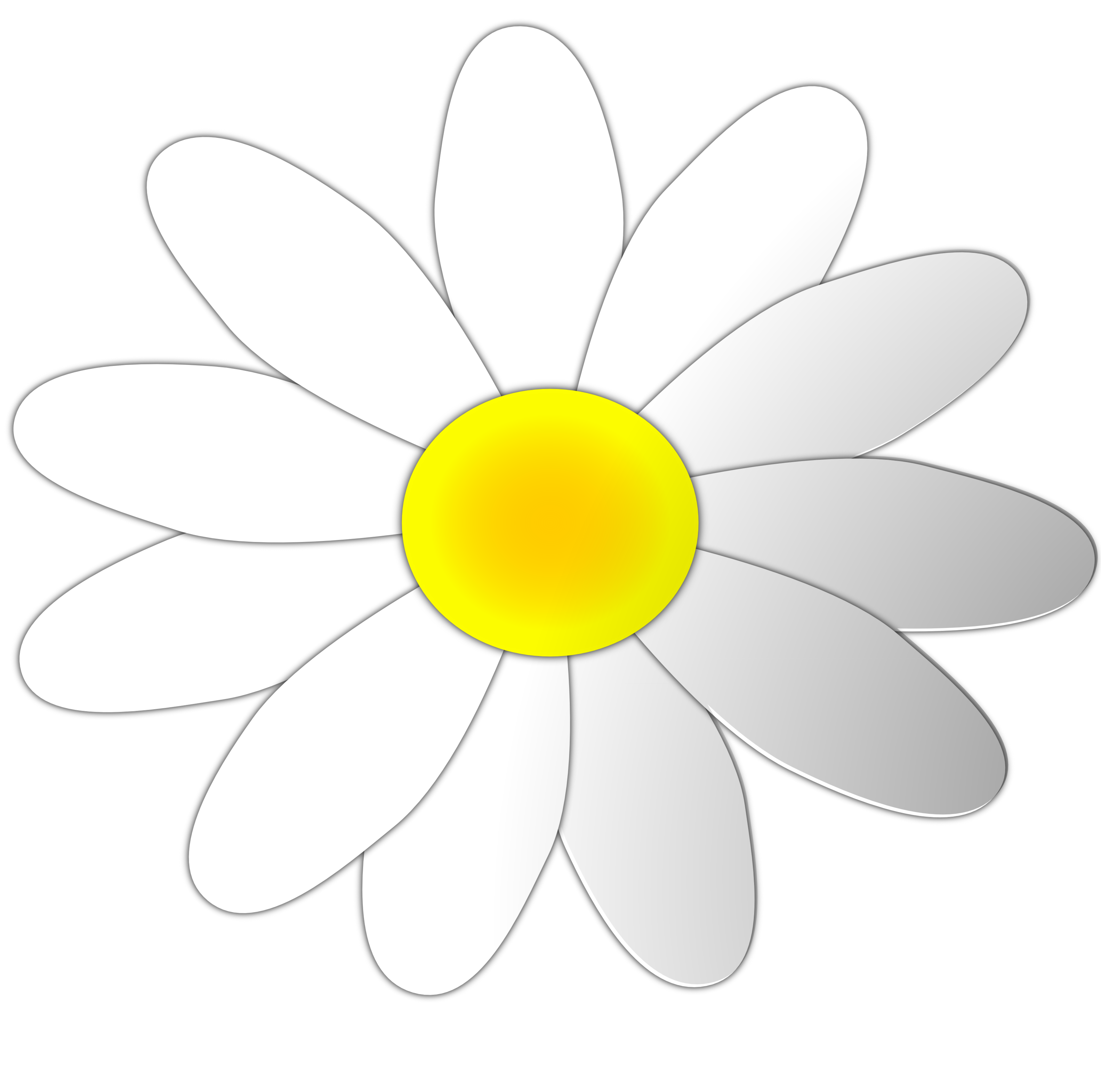 Daisy clipart. Free flower cliparts download