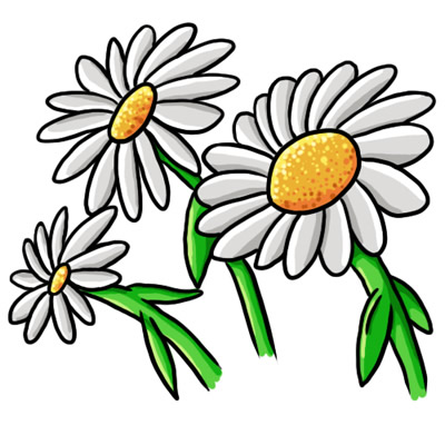 Daisies clipart. Free daisy images download
