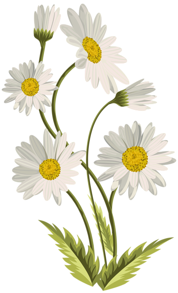 Daisies clipart bow. Transparent png clip art