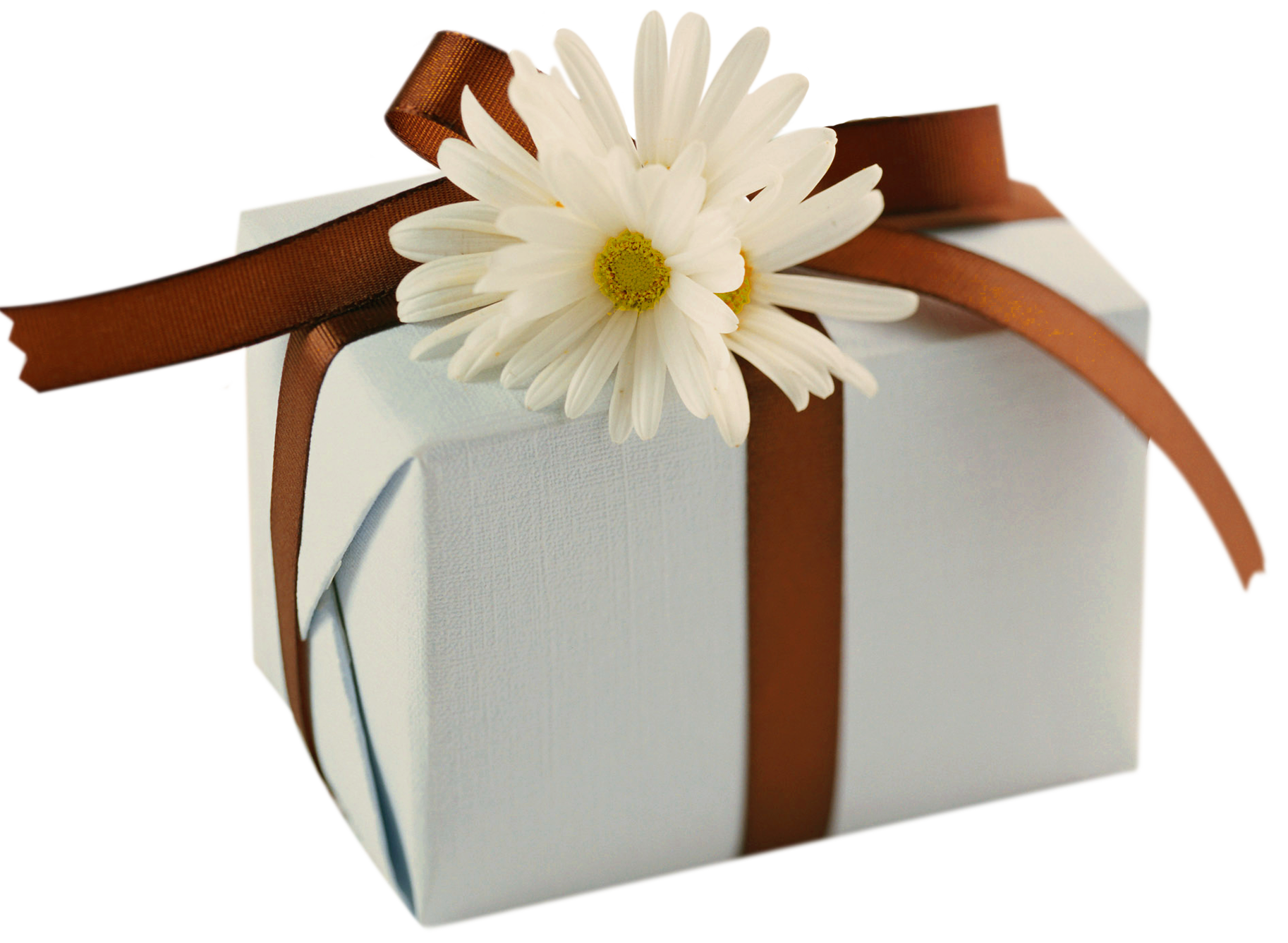 Daisies clipart bow. White present with brown