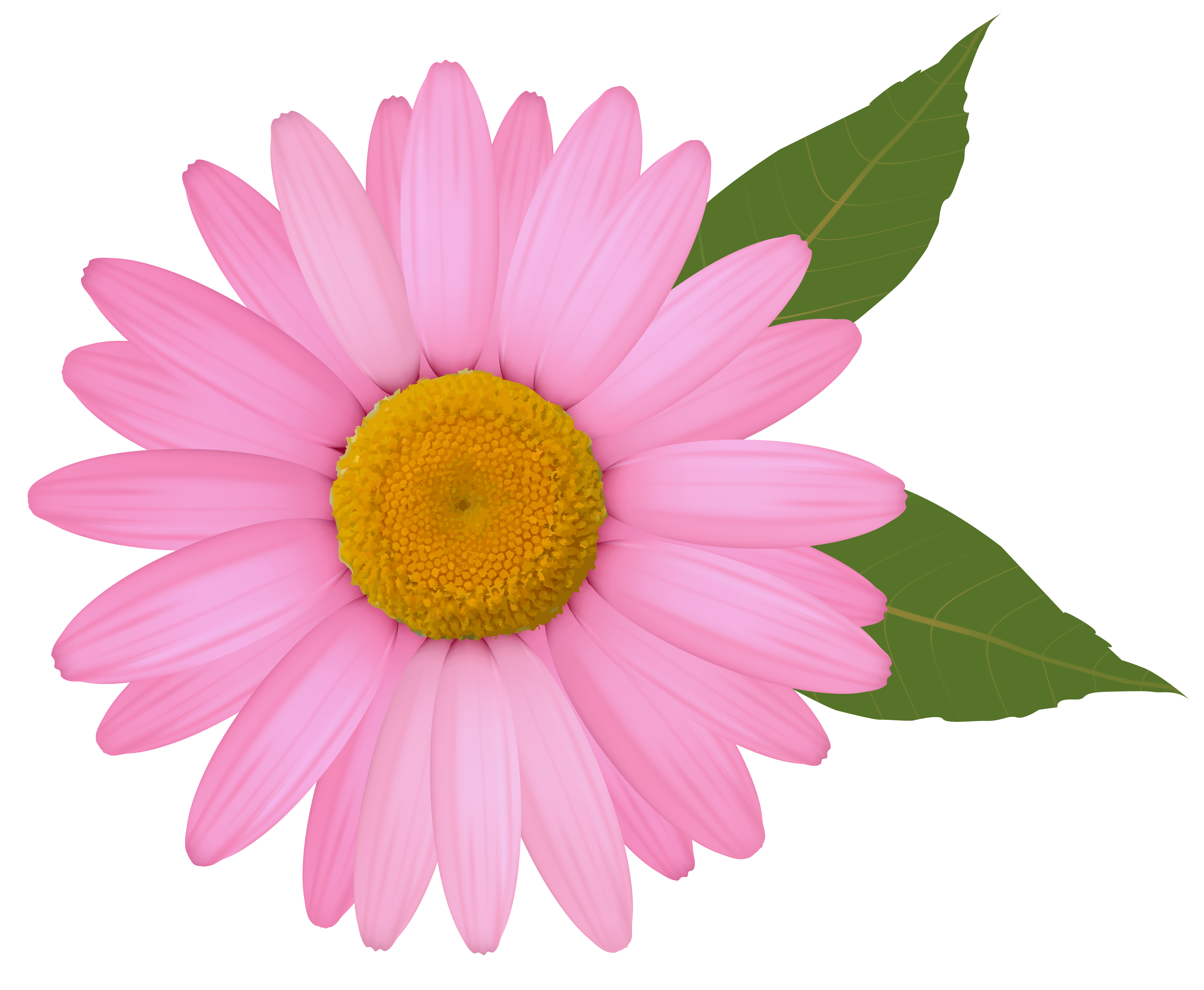 Pink png image gallery. Daisy clipart frame svg black and white download