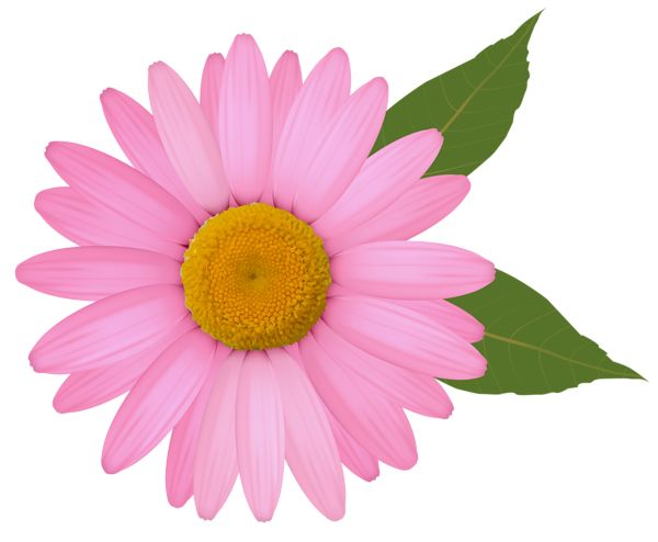 Daisies clipart four flower. Best png images