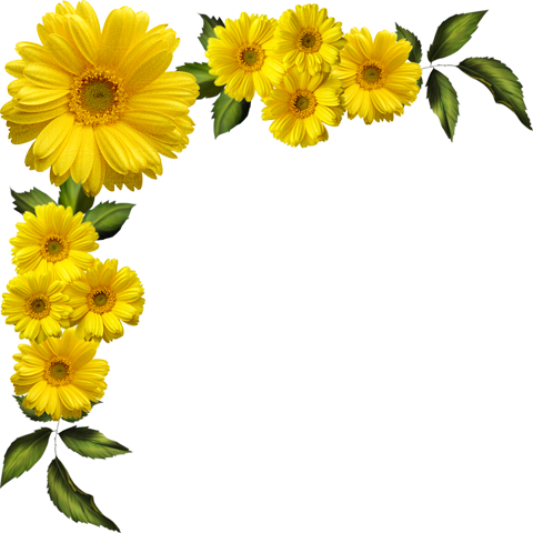 Daisies clipart four flower. Yellow transparent