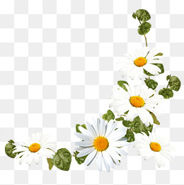 Daisies clipart four flower. Daisy png vectors psd