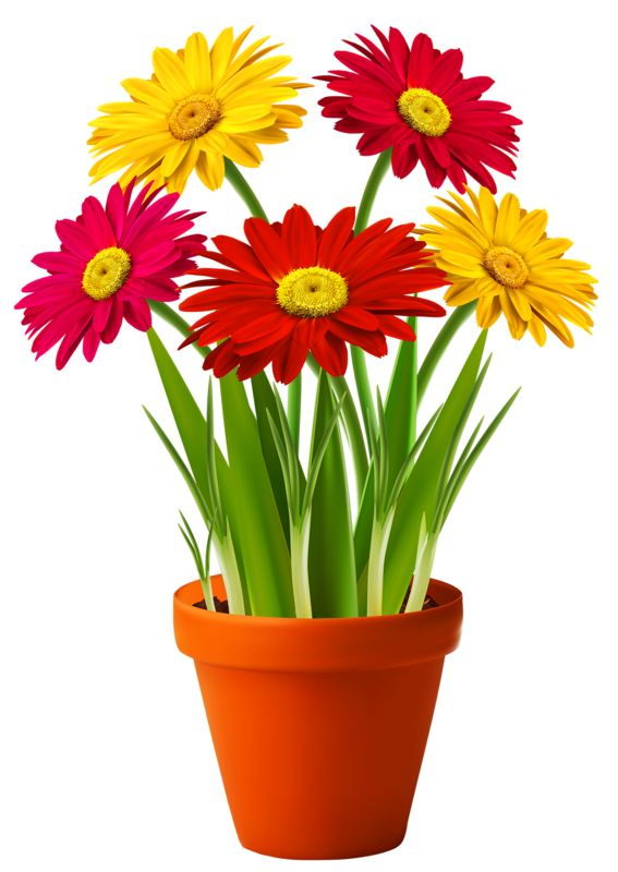 Daisies clipart four flower. Best emoticons flowers