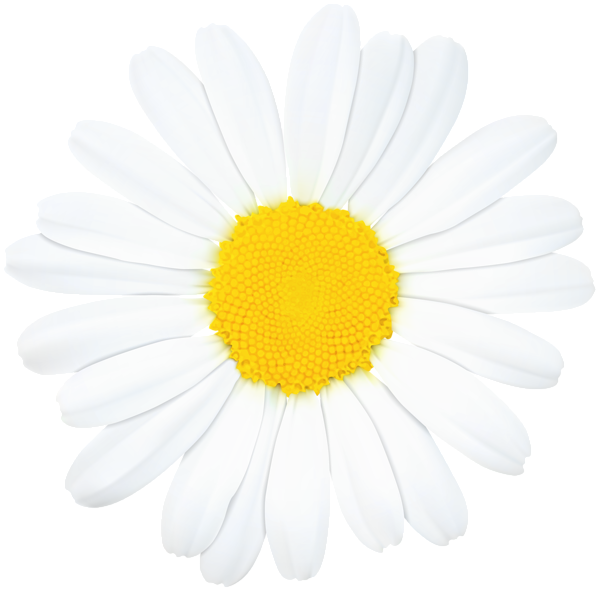 Daisy clipart bloom. Pin by angie pantoja