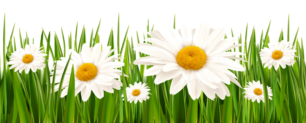 Daisy clipart banner. Poppies and daisies with