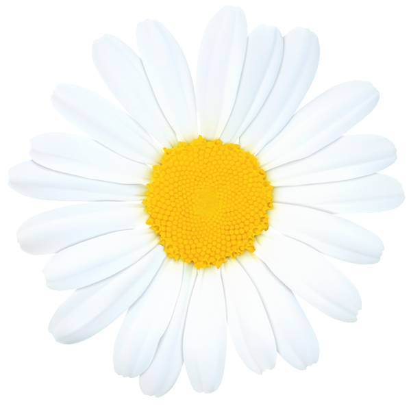 Daisies clipart marguerite daisy. Png clip art image