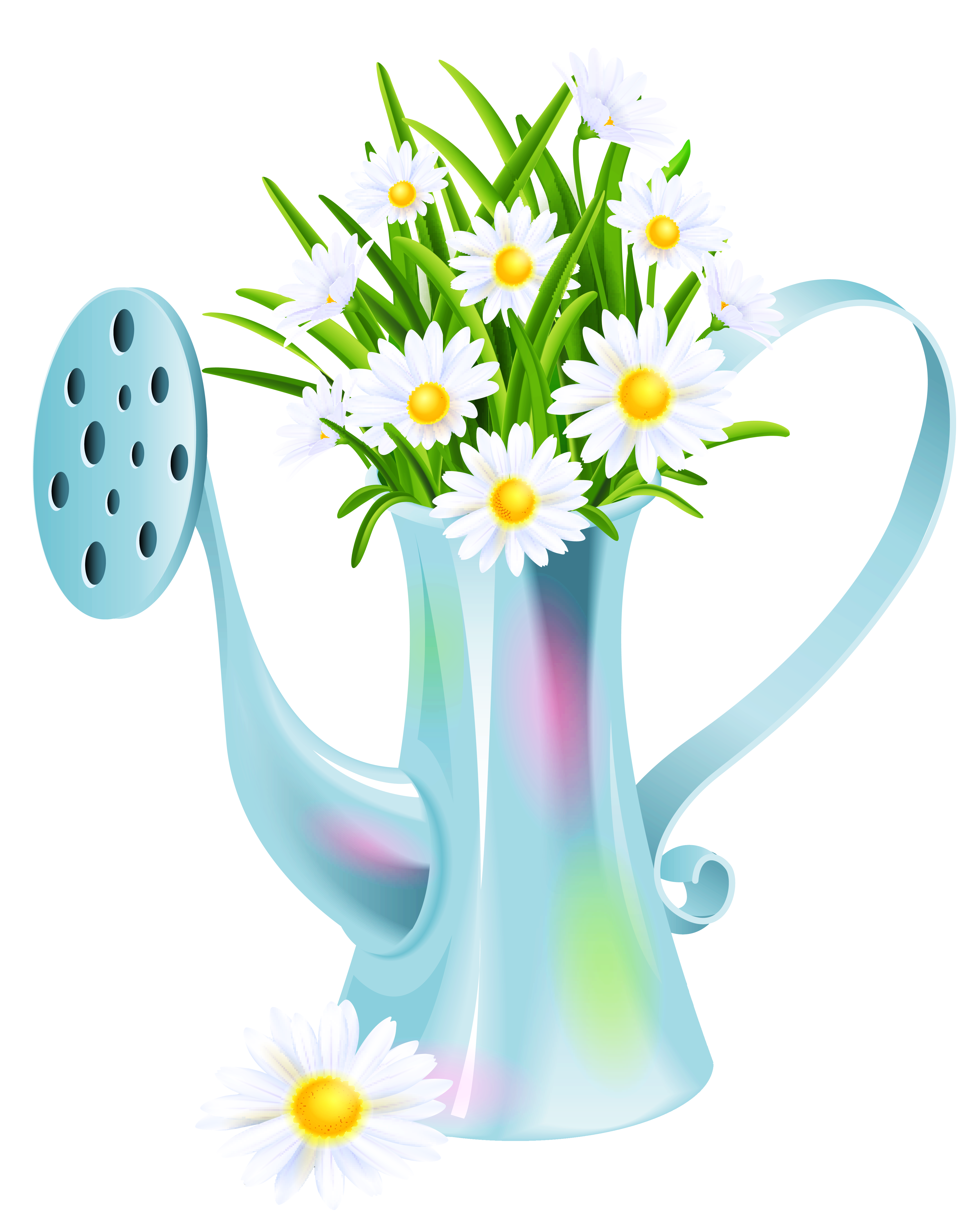 Daisies clipart multicolor. Water can with png