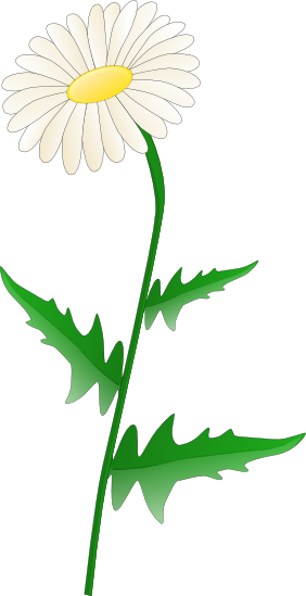 And vector illustrations if. Daisy clipart transparent background graphic black and white download