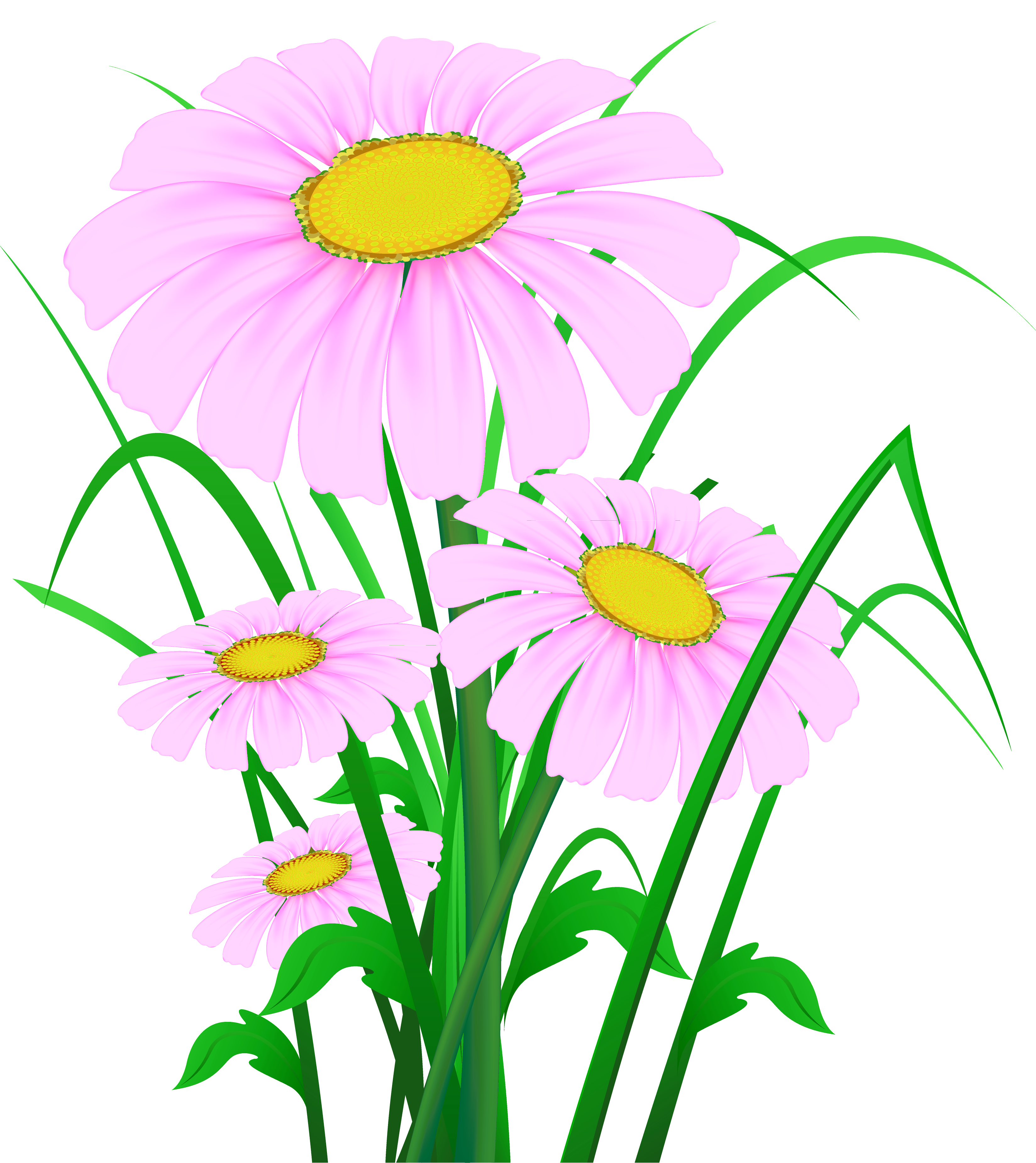 Daisies clipart wild flower. Transparent pink png gallery