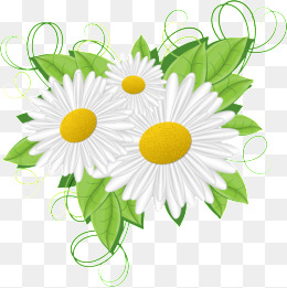 Daisy clipart. White png vectors psd
