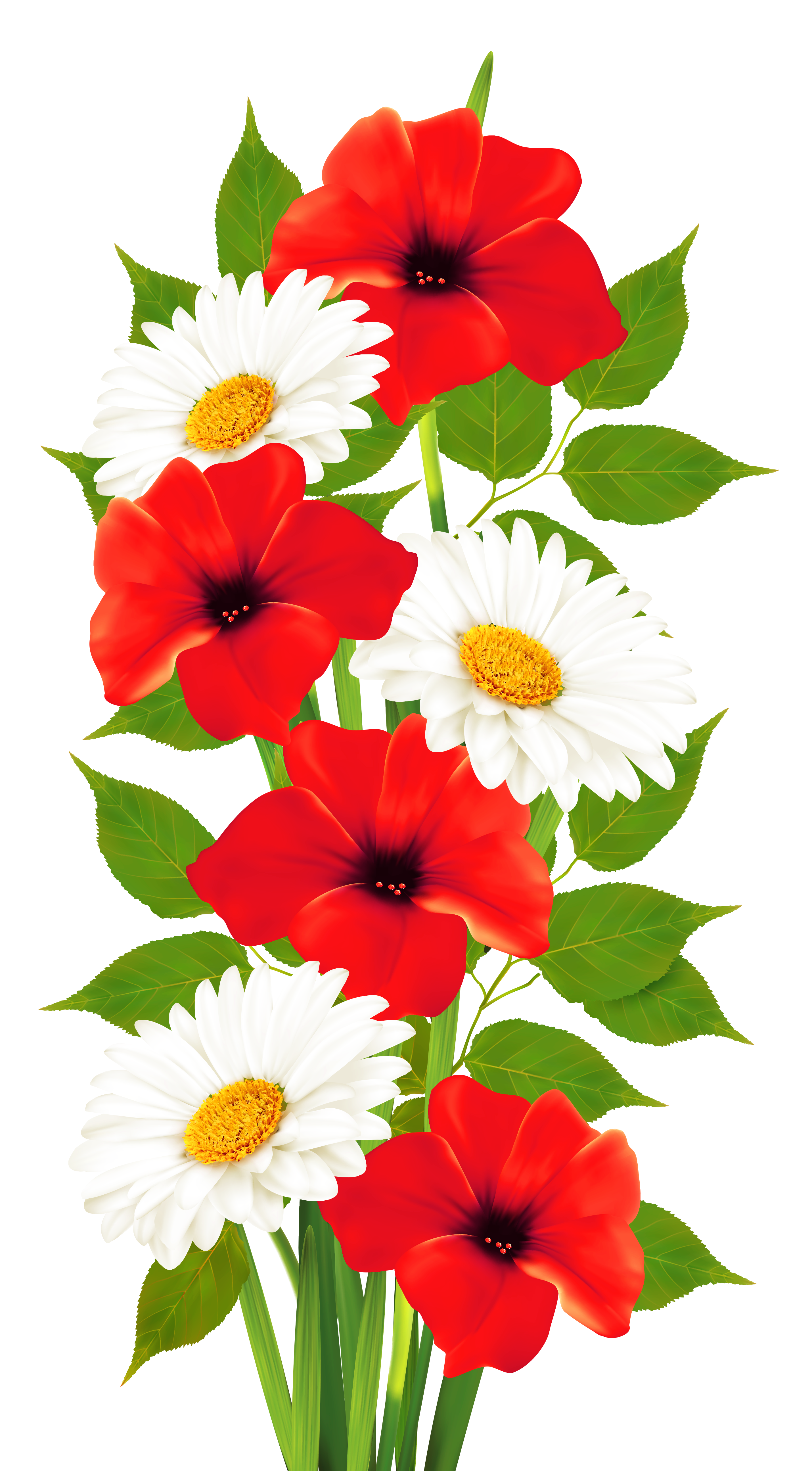 Poppies and daisies transparent. Daisy clipart banner png black and white stock