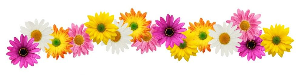 Daisy clipart banner. Spring flowers flower patterns