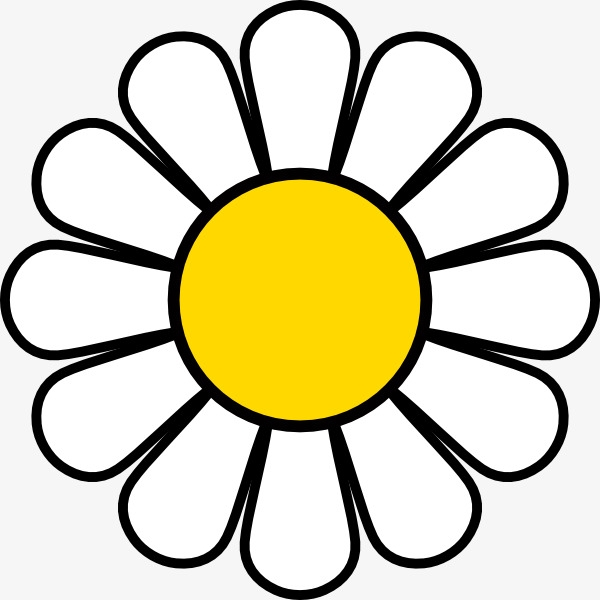 Daisy clipart bloom. Of daisies flowers white