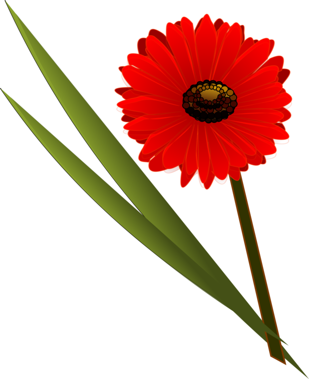 Flower floral design transvaal. Daisy clipart daisy bouquet png library