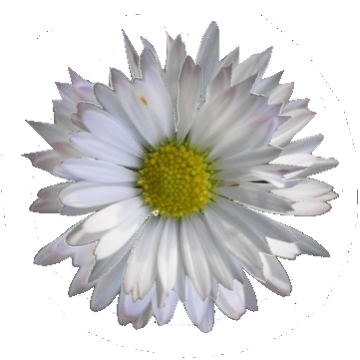 Daisy clipart daisy bouquet. Art nouveau flowers