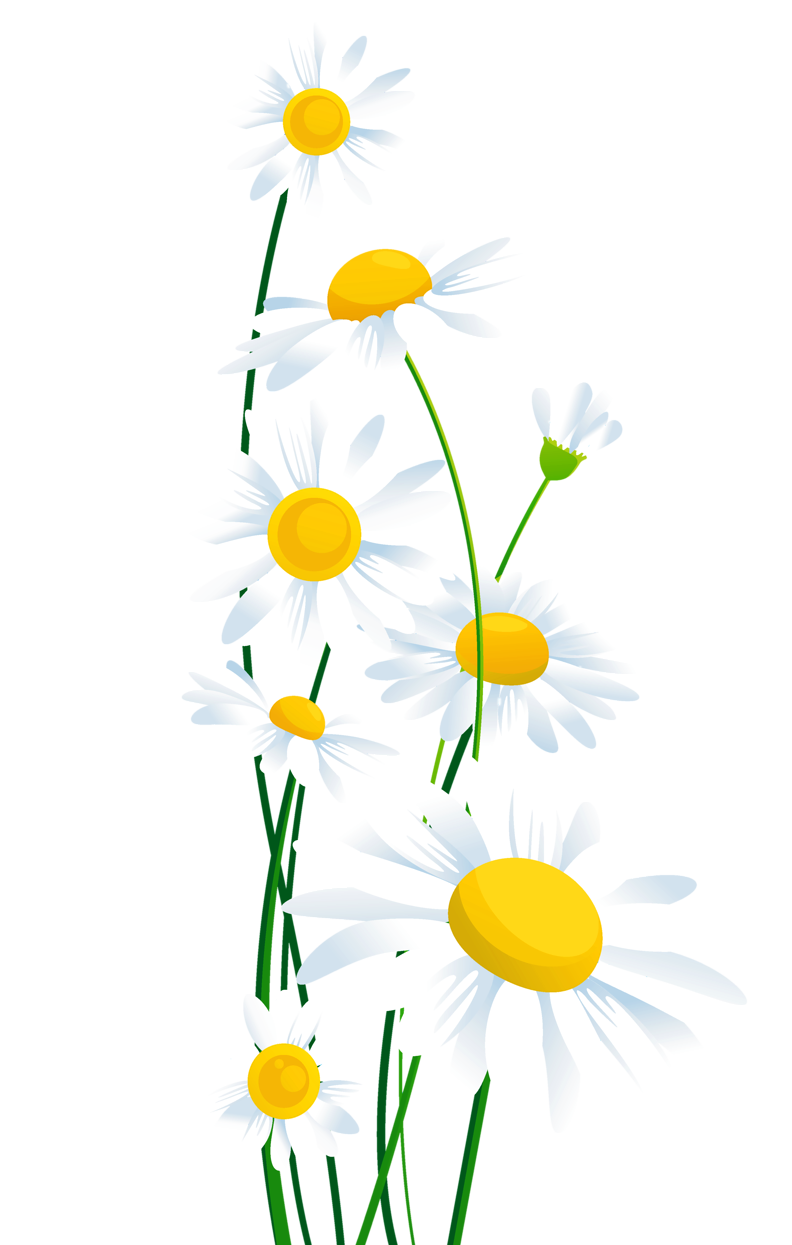 Pin by angie on. Daisy clipart frame banner black and white stock