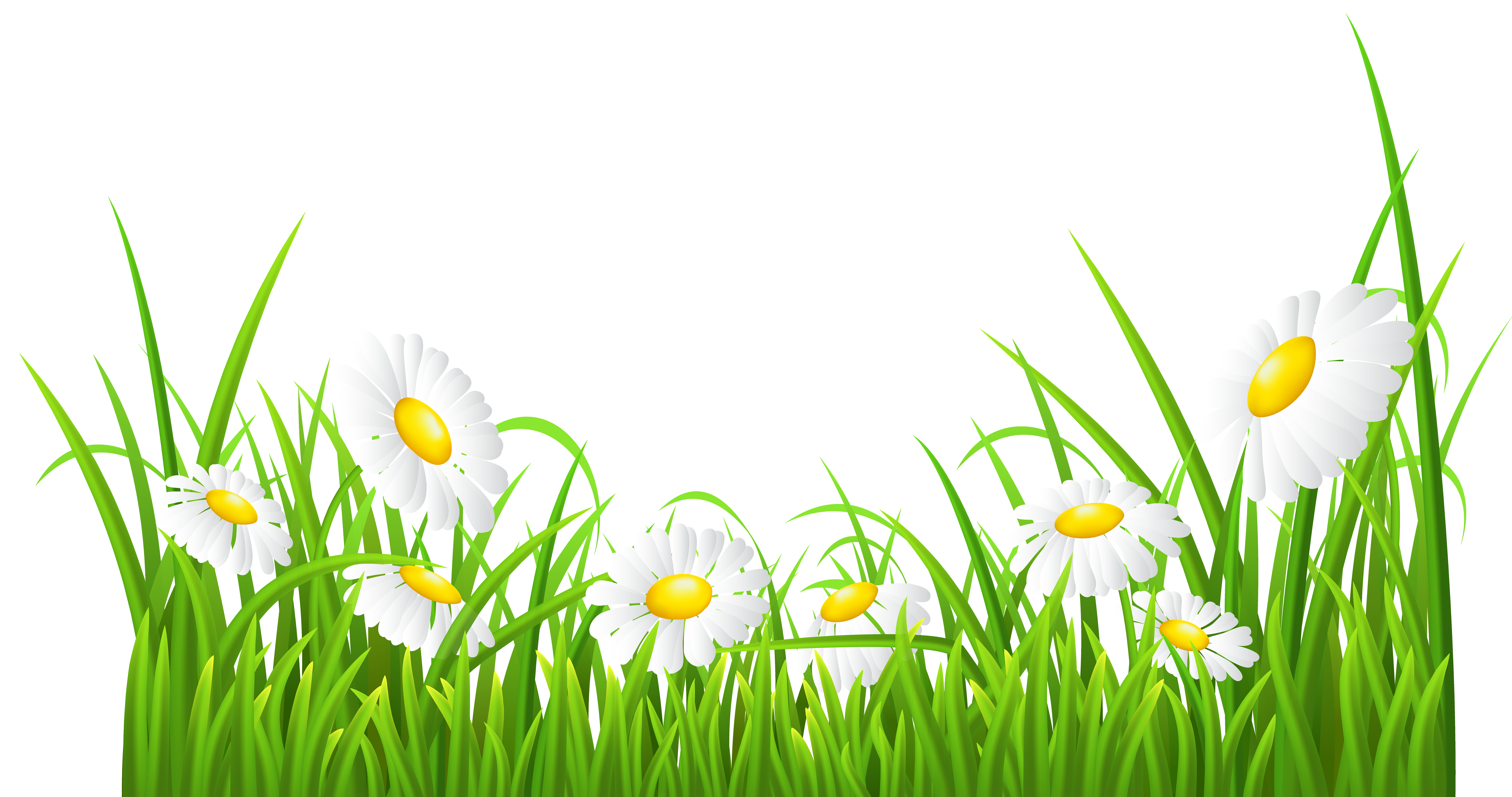 Daisy clipart landscape. White daisies and grass