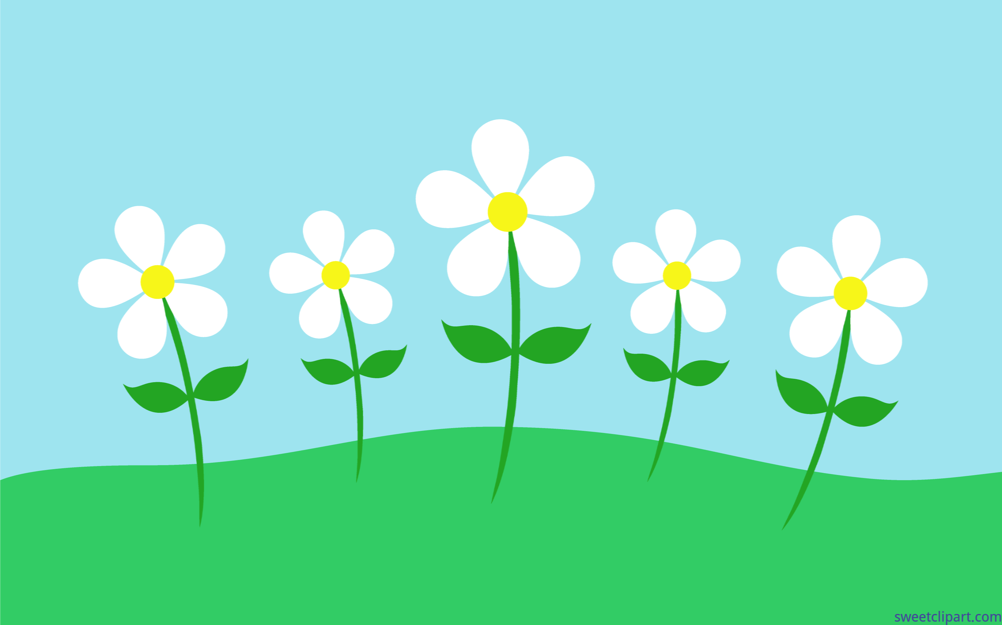 Daisy clipart landscape. Spring flowers daisies clip
