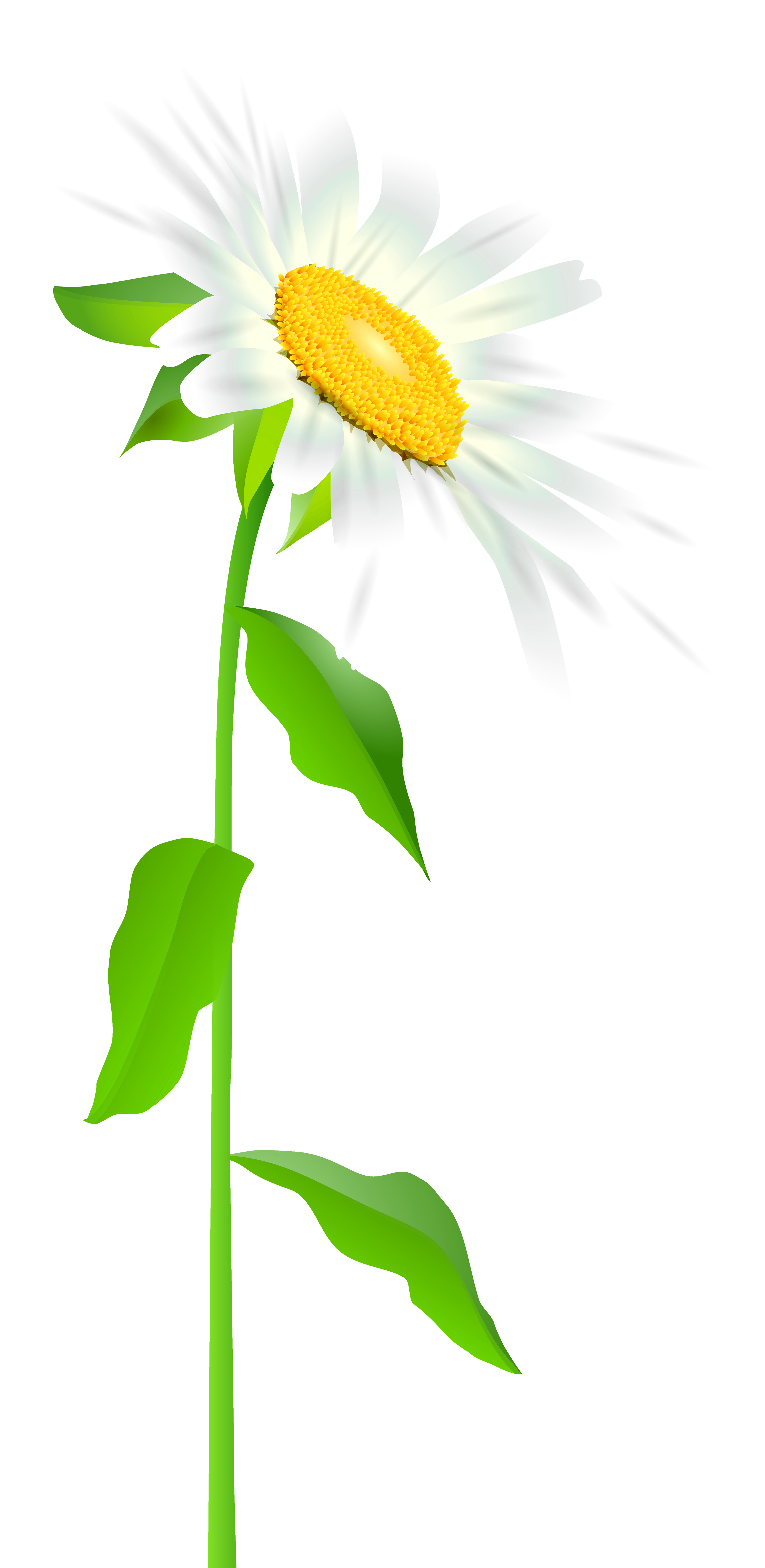Daisy clipart long stem flower. With transparent png clip