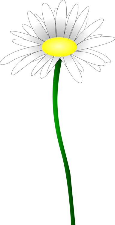 Daisy clipart long stem flower. Common oxeye petal line
