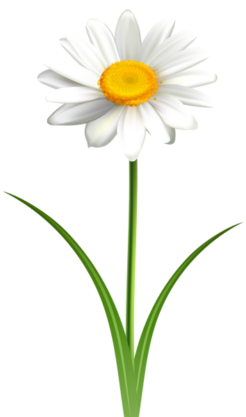 Daisy clipart long stem flower. Pin by angie pantoja