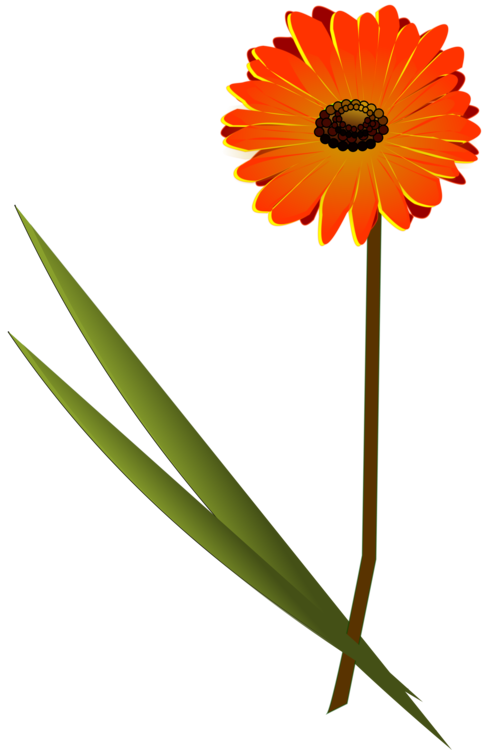 Daisy clipart long stem flower. Transvaal family cut flowers