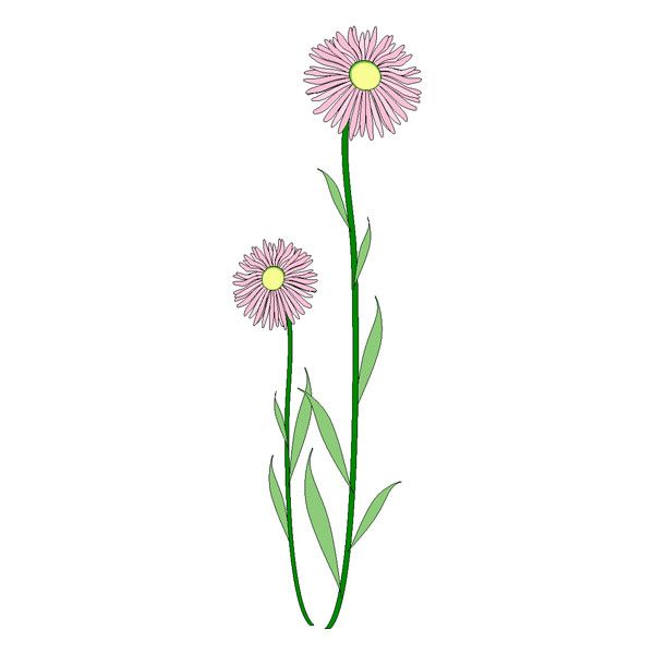 Daisy clipart long stem flower. Best stems images