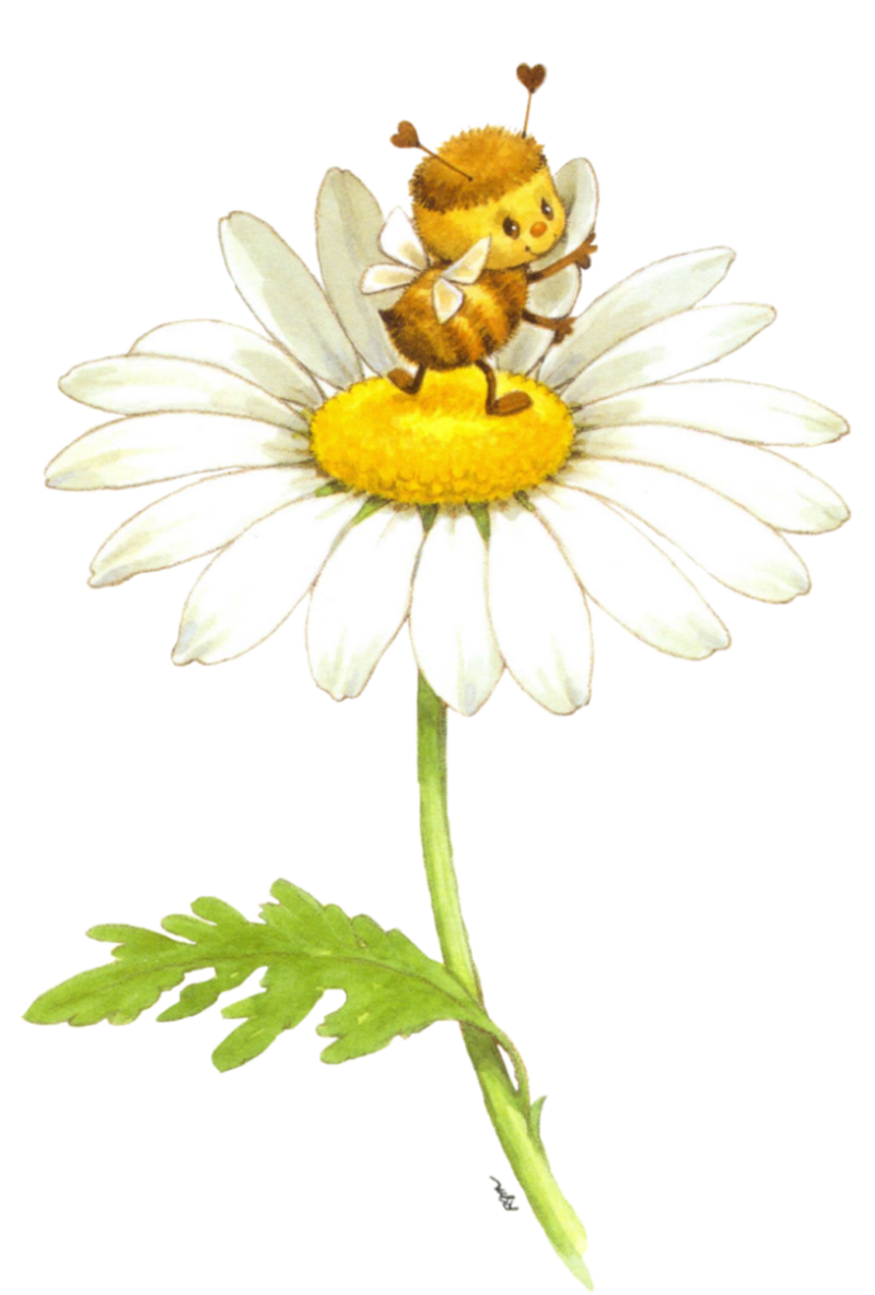 Daisy clipart plant insect. Printable ruth morehead clipuri