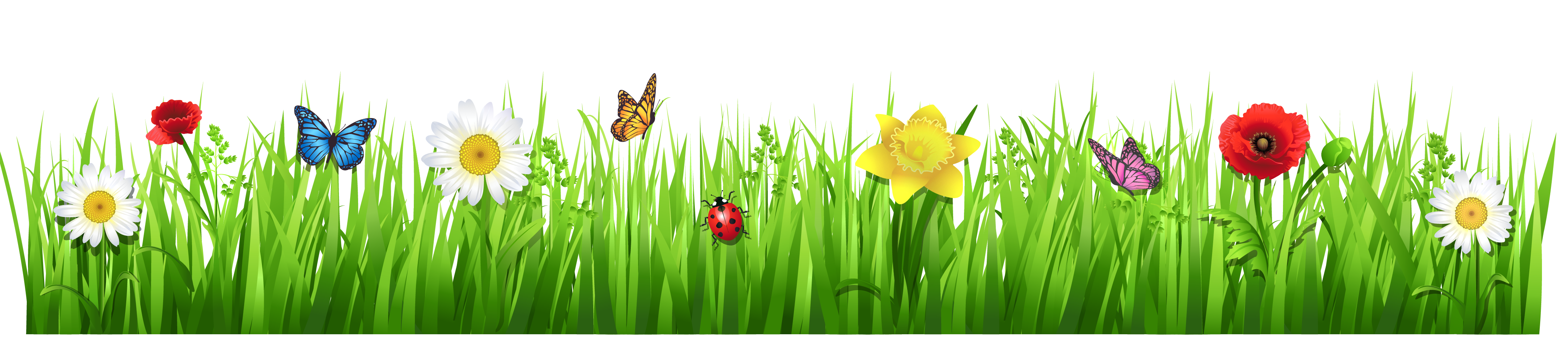 Daisy clipart plant insect. Daisies with grass png