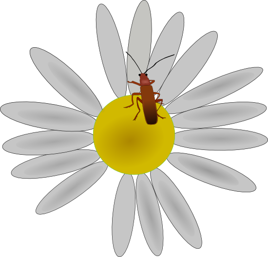 Daisy clipart plant insect. And vector illustrations bug