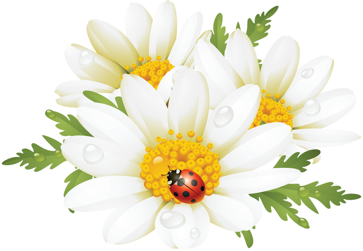 Daisy clipart plant insect. Pin by sonia vincenti