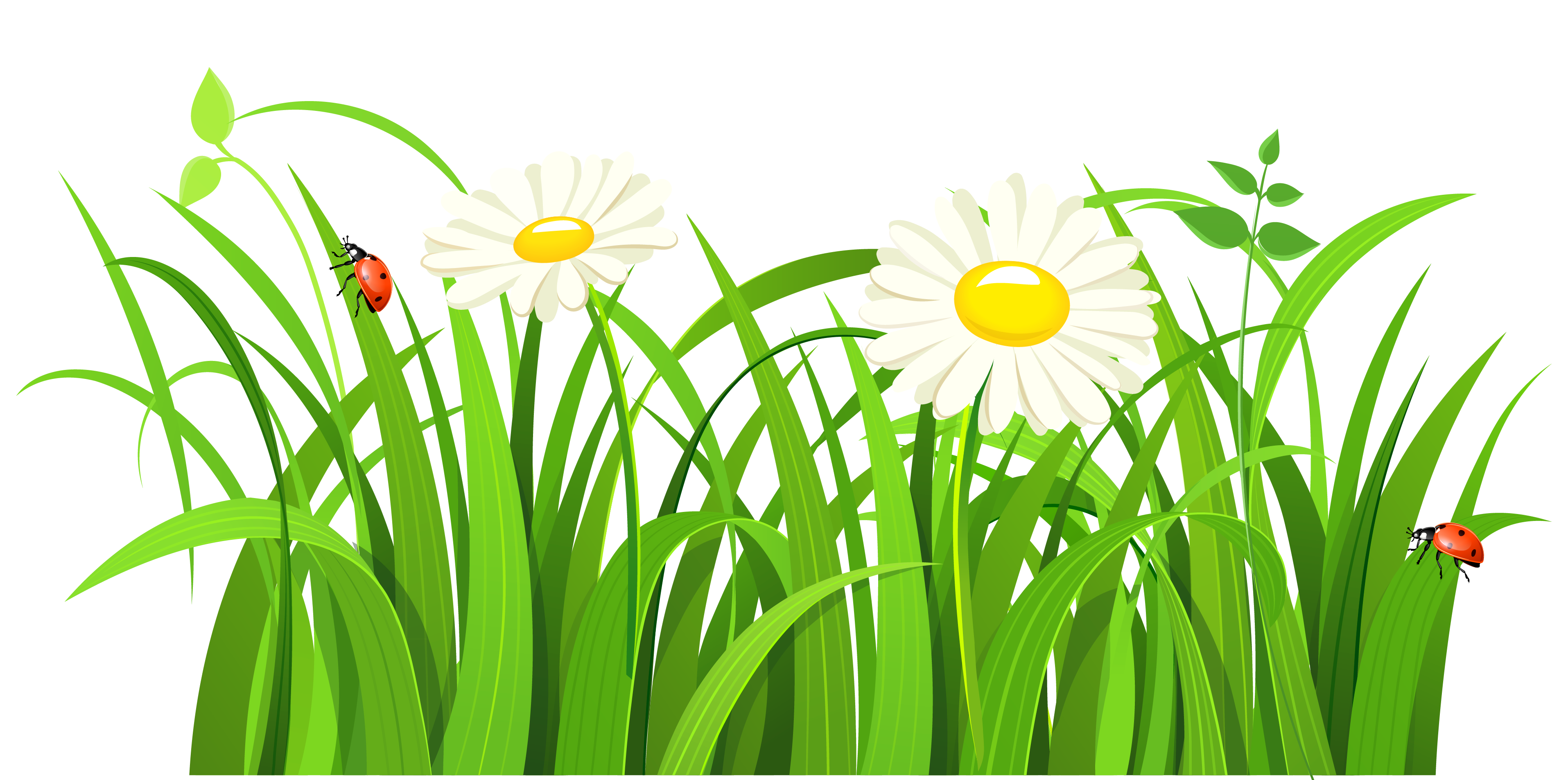 Daisy clipart plant insect. Grass with daisies and