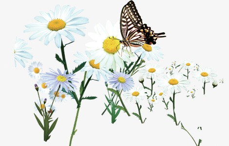 Daisy clipart plant insect. Butterfly on a flowers