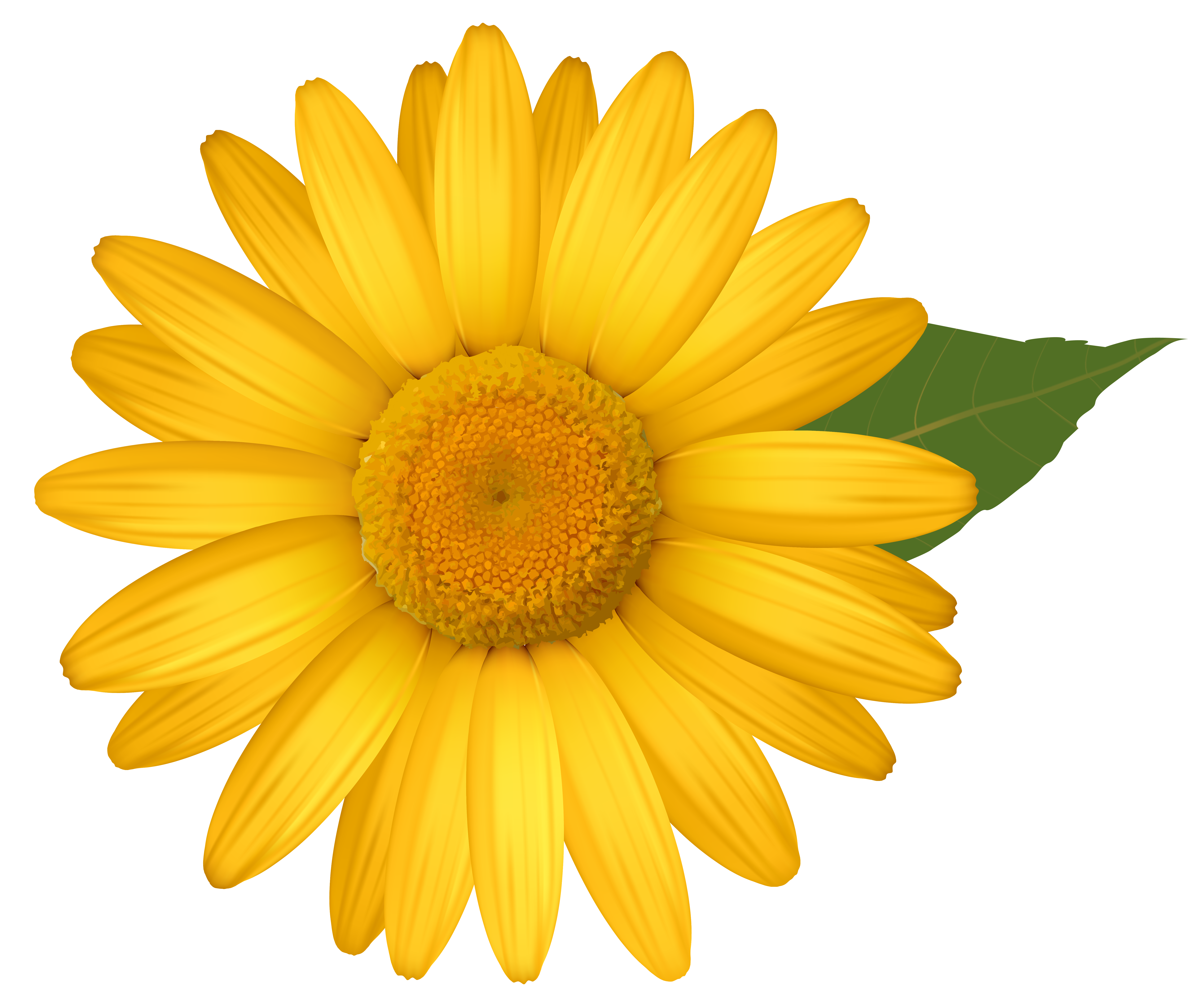 Daisy clipart png. Yellow image gallery yopriceville