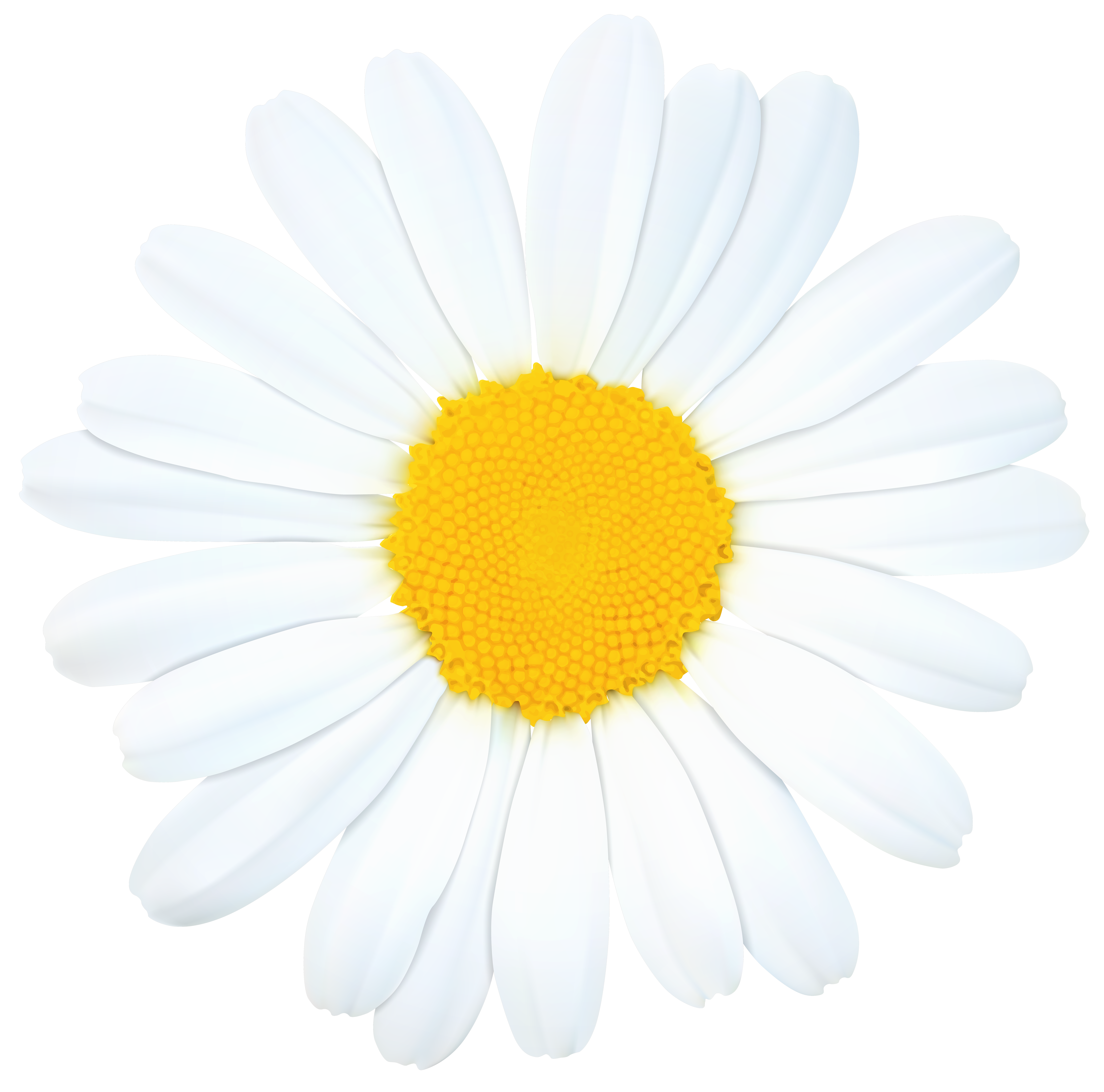 Daisy png clip art. Daisies clipart silhouette picture freeuse download