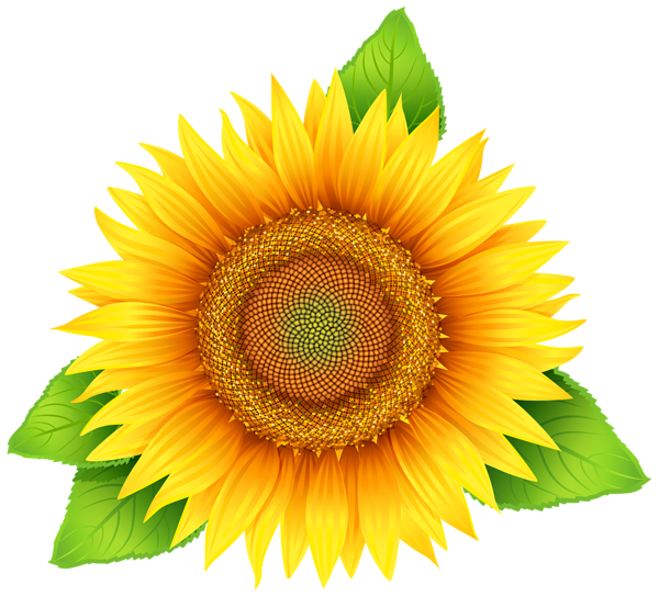 sunflower png art