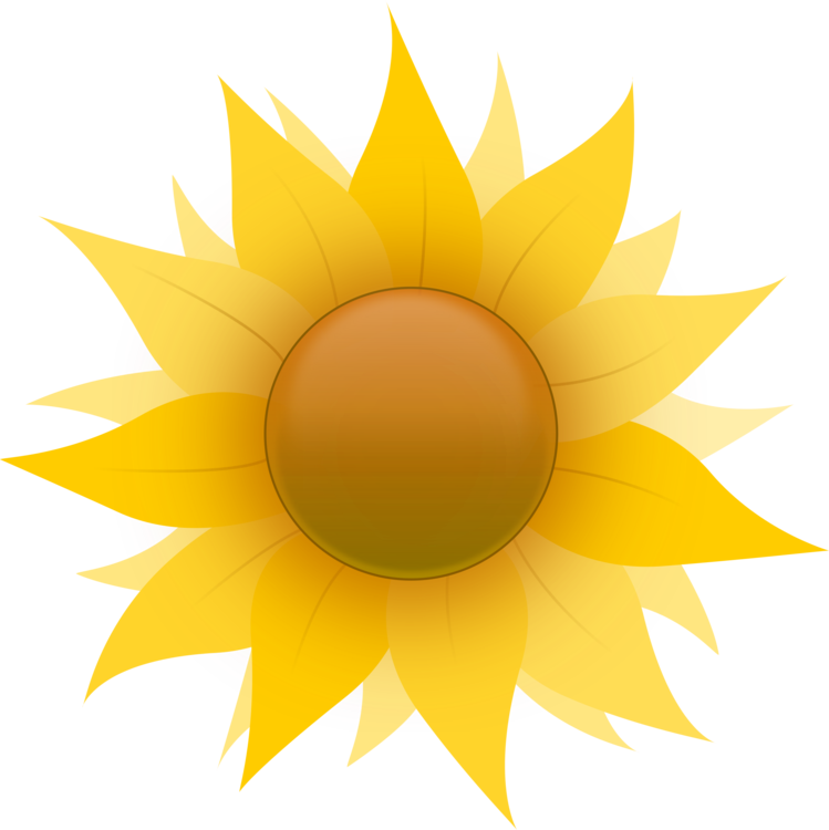 Daisy clipart sunflower. Common family drawing art