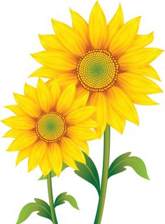 Daisy clipart sunflower. Png picture gallery yopriceville