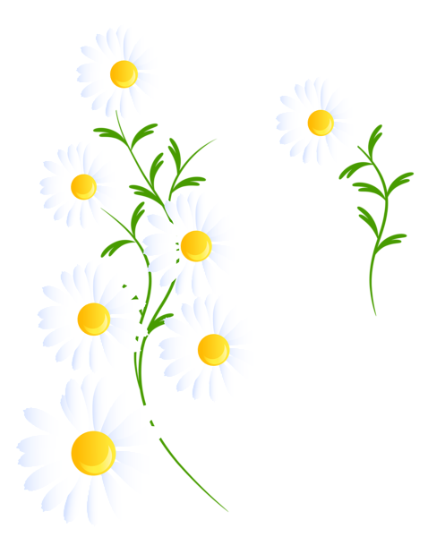 Transparent white daisies decoration. Daisy clipart frame clipart freeuse download