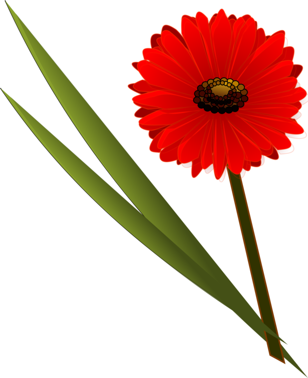 Daisy clipart vine. Cut flowers transvaal common