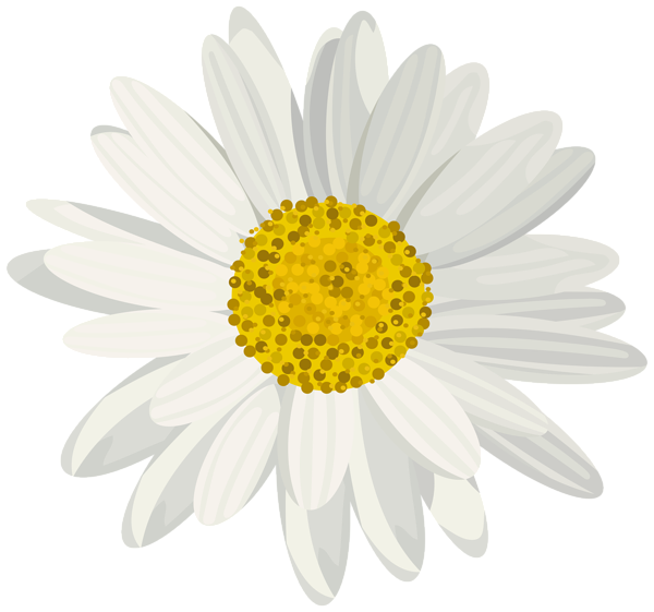 Daisy png. Clip art image aa