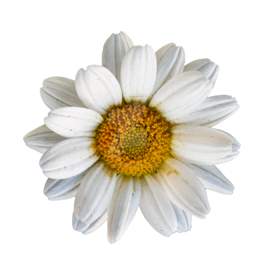 Daisy png. Dog by bunny with